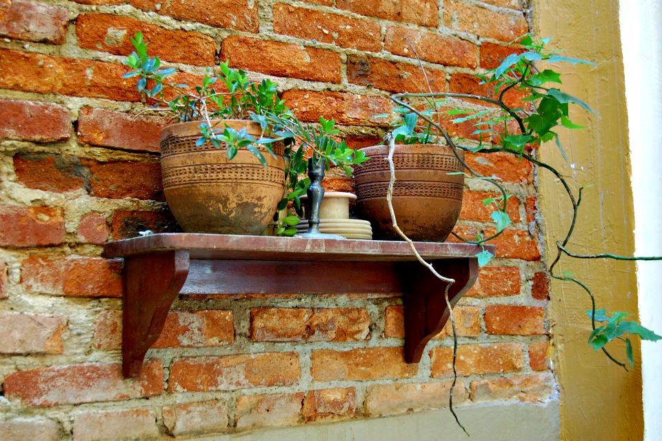 Dica de decoração barata para leigos plantas 2