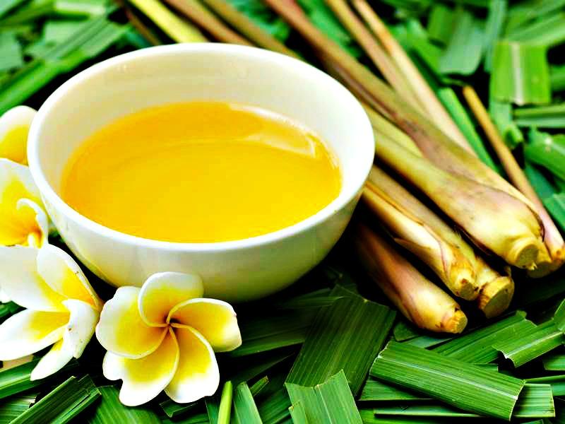 3 Receitas de repelentes naturais com óleo essencial de Citronela laszlo