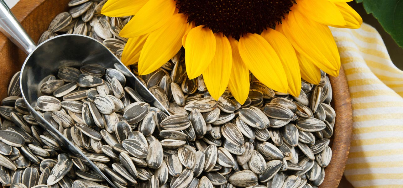Os Melhores Alimentos para uma Pele Saudável Semente de girassol